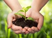 vendita diretta al campo per aziende agricole